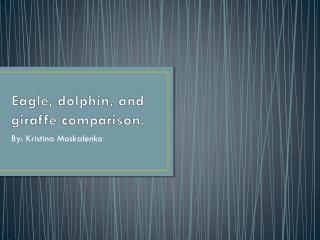 Eagle, dolphin, and giraffe comparison.