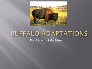 Buffalo Adaptations