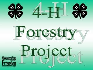 4-H Forestry Project