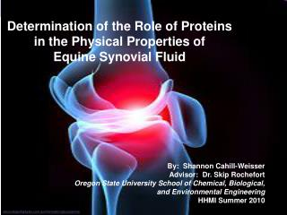 Determination of the Role of Proteins in the Physical Properties of  Equine Synovial Fluid