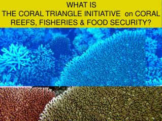 WHAT IS  THE CORAL TRIANGLE INITIATIVE  on CORAL REEFS, FISHERIES & FOOD SECURITY?