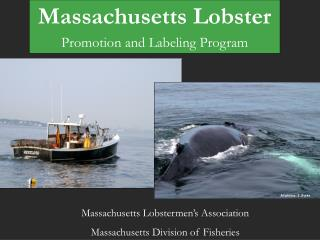 Massachusetts Lobster Promotion and Labeling Program