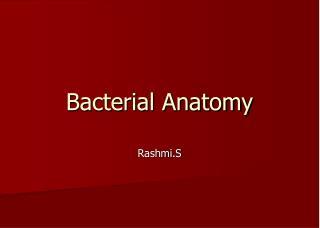 Bacterial Anatomy