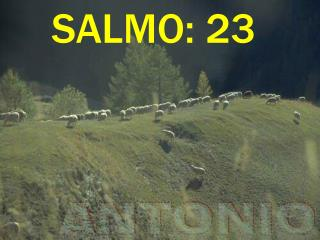 SALMO: 23