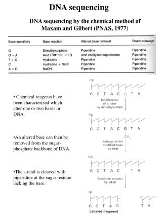 DNA sequencing by the chemical method of  Maxam and Gilbert (PNAS, 1977)