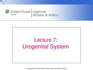 Lecture 7: Urogenital System