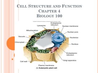 Cell Structure and Function Chapter 4 Biology 100