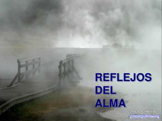 REFLEJOS DEL  ALMA