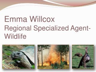 Emma Willcox Regional Specialized Agent- Wildlife