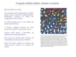 Nessuna cellula vive isolata.