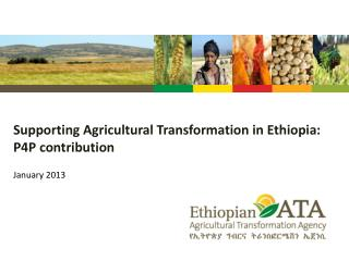 Supporting Agricultural Transformation in  Ethiopia: P4P  contribution
