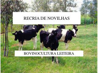 RECRIA DE NOVILHAS