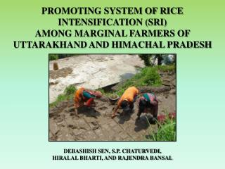 PROMOTING SYSTEM OF RICE INTENSIFICATION SRI  AMONG MARGINAL FARMERS OF UTTARAKHAND AND HIMACHAL PRADESH