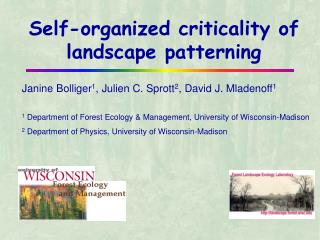 Self-organized criticality of landscape patterning