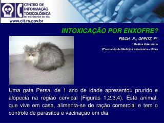 Cit.rs.br