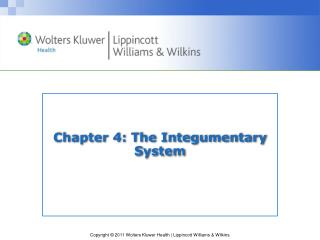 Chapter 4: The Integumentary System