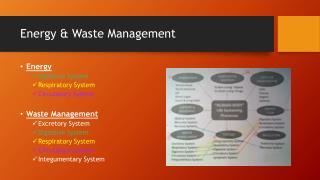 Energy & Waste Management