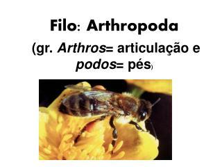 Filo: Arthropoda  (gr.  Arthros = articulação e  podos = pés )