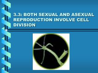 3.3: BOTH SEXUAL AND ASEXUAL REPRODUCTION INVOLVE CELL DIVISION