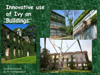 Innovative use of Ivy on Buildings
