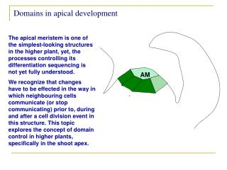 Domains in apical development