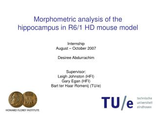 Morphometric analysis of the hippocampus in R6/1 HD mouse model
