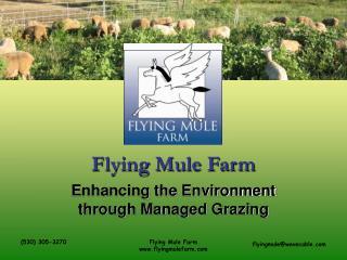 Flying Mule Farm