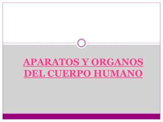 APARATOS Y ORGANOS DEL CUERPO HUMANO