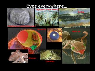 Eyes everywhere�