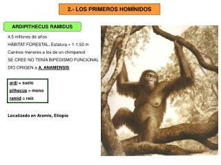 2.- LOS PRIMEROS HOM�NIDOS