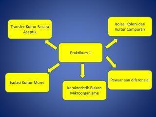 Praktikum  1