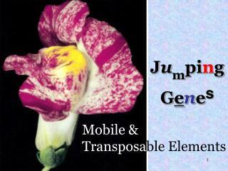 Mobile & Transposa ble Elements