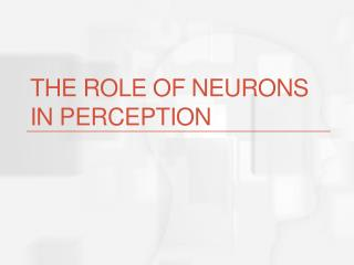 The role of neurons in perception