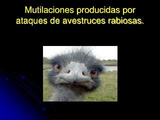 Mutilaciones producidas por ataques de avestruces rabiosas.