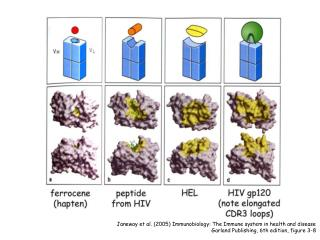 Janeway et al. (2005) Immunobiology: The Immune system in health and disease
