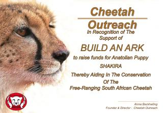 Annie Beckhelling Founder & Director :  Cheetah Outreach