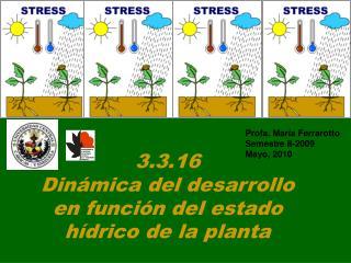 3.3.16 Dinámica del desarrollo  en función del estado  hídrico de la planta