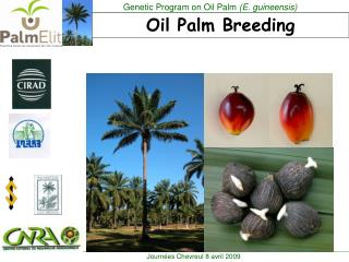 Oil Palm Breeding