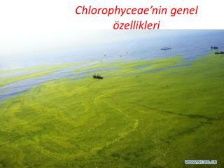 Chlorophyceae'nin  genel özellikleri
