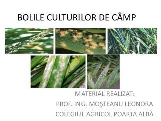 BOLILE CULTURILOR DE C ÂMP