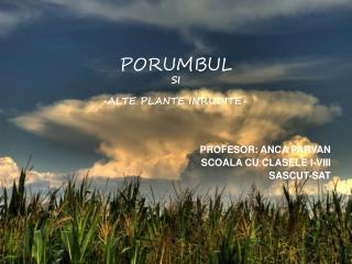 PORUMBUL SI - ALTE PLANTE INRUDITE-
