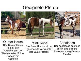 Geeignete Pferde