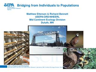 Bridging from Individuals to Populations