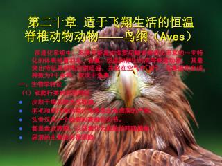 第二十章 适于飞翔生活的恒温 脊椎动物动物 —— 鸟纲( Aves )