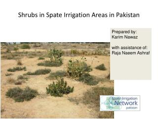 Shrubs in Spate Irrigation Areas in Pakistan