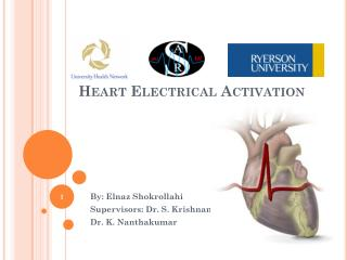 Heart Electrical Activation