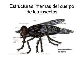 Estructuras internas del cuerpo de los insectos