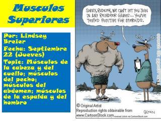 Musculos Superiores