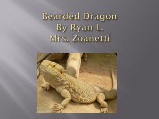Bearded Dragon By  Ryan  L. Mrs.  Zoanetti