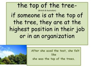 After she aced the test, she felt like  s he was the top of the trees.